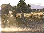 Kim's ranch