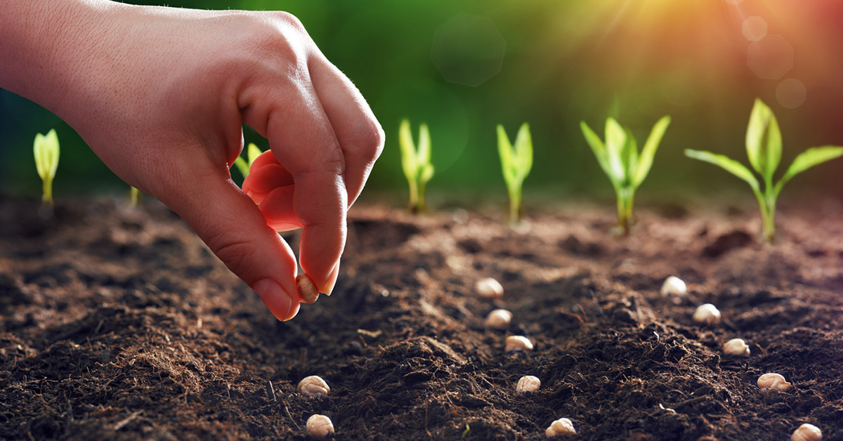 Sow The Seeds Where You Are Cbn Com