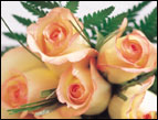 christmas Devotion picture of orange roses