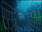 daily Devotion spider web with dark blue green background