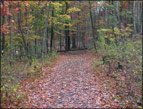 Fall Wooded Path photo by John A. Adam