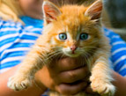 daily Devotion child holding a blue-eyed orange kitten