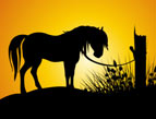 daily Devotion sunset horse tethered to tree silhouette