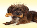 terrier dog with bone