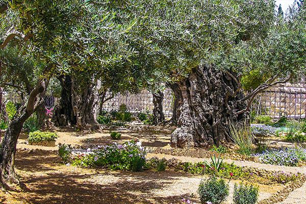 Jerusalem Like No Other City