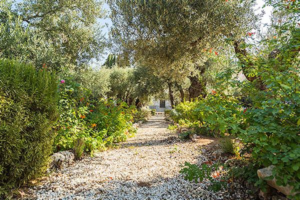 Scripture Comes Alive at the Garden of Gethsemane | CBN.com