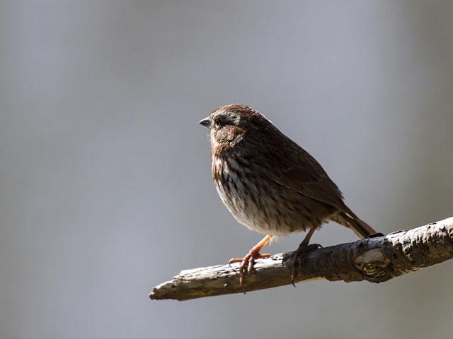 God Doesn T Forget A Single Bird Daily Devotion Cbn Com